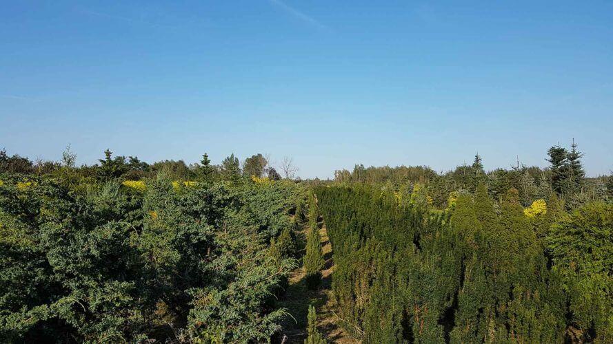 Szkółka drzew i krzewów ozdobnych Warszawa - Wojciech Mierzejewski